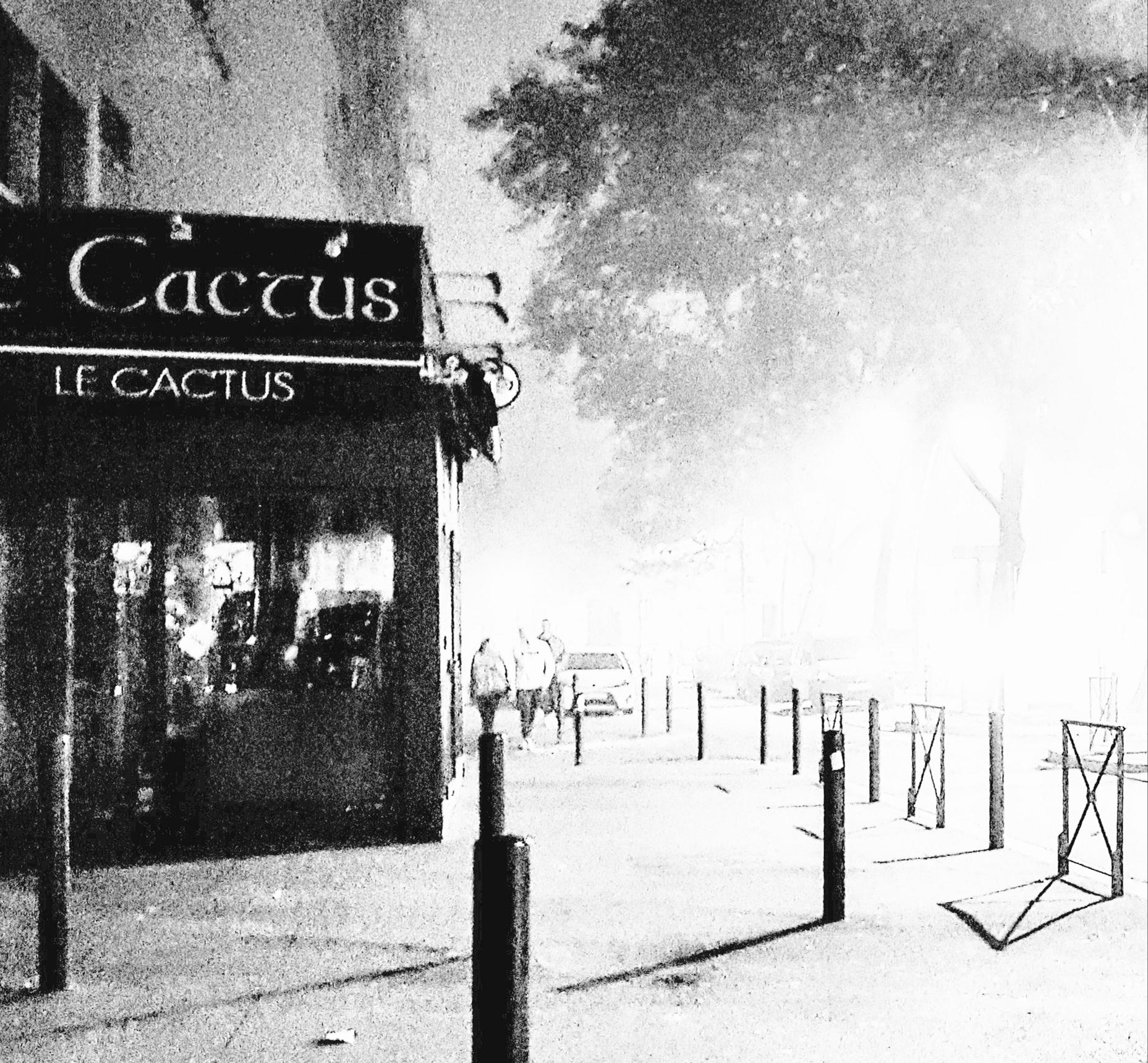 cactus brouillard